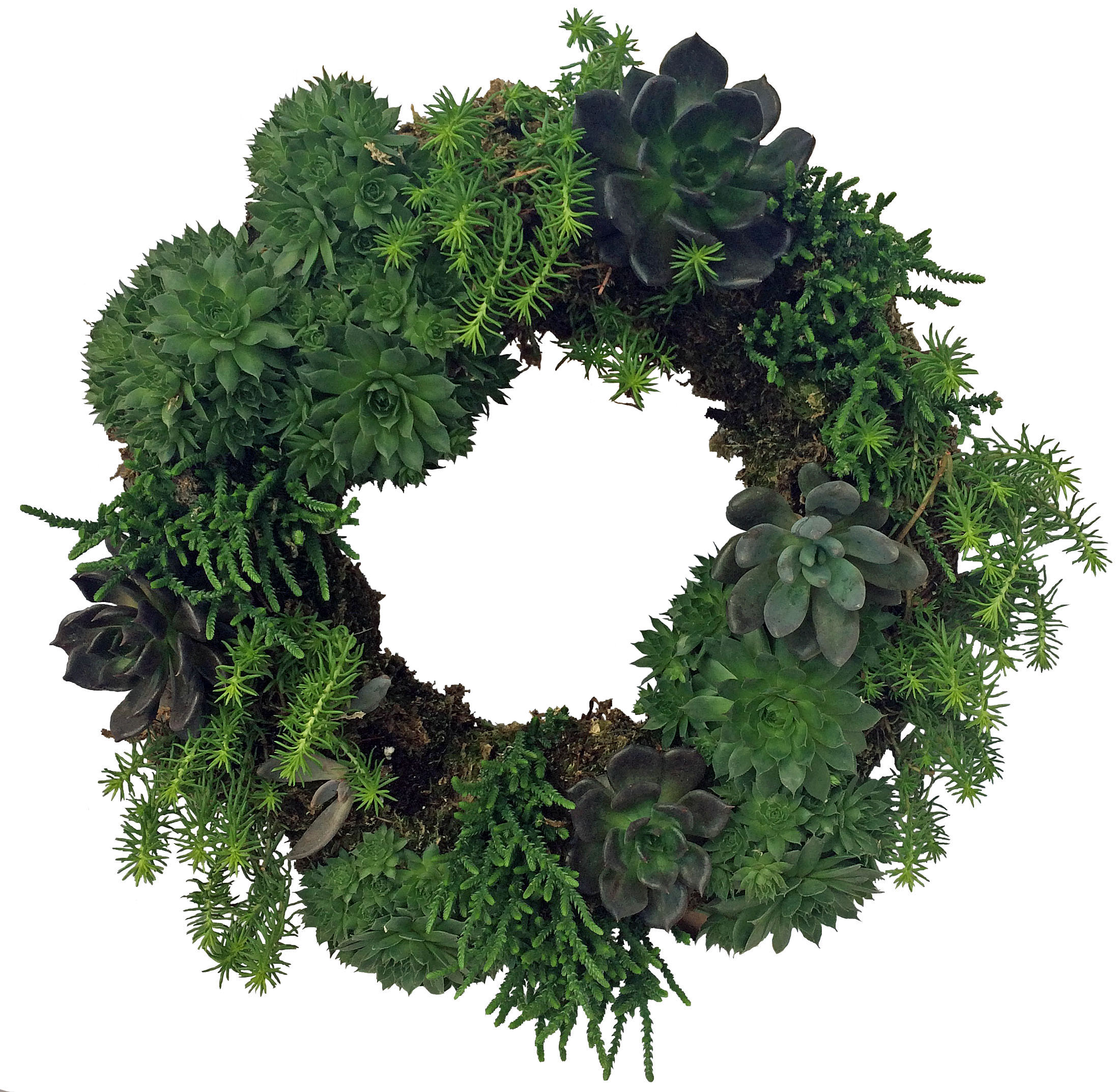 succulent-wreath-2-website