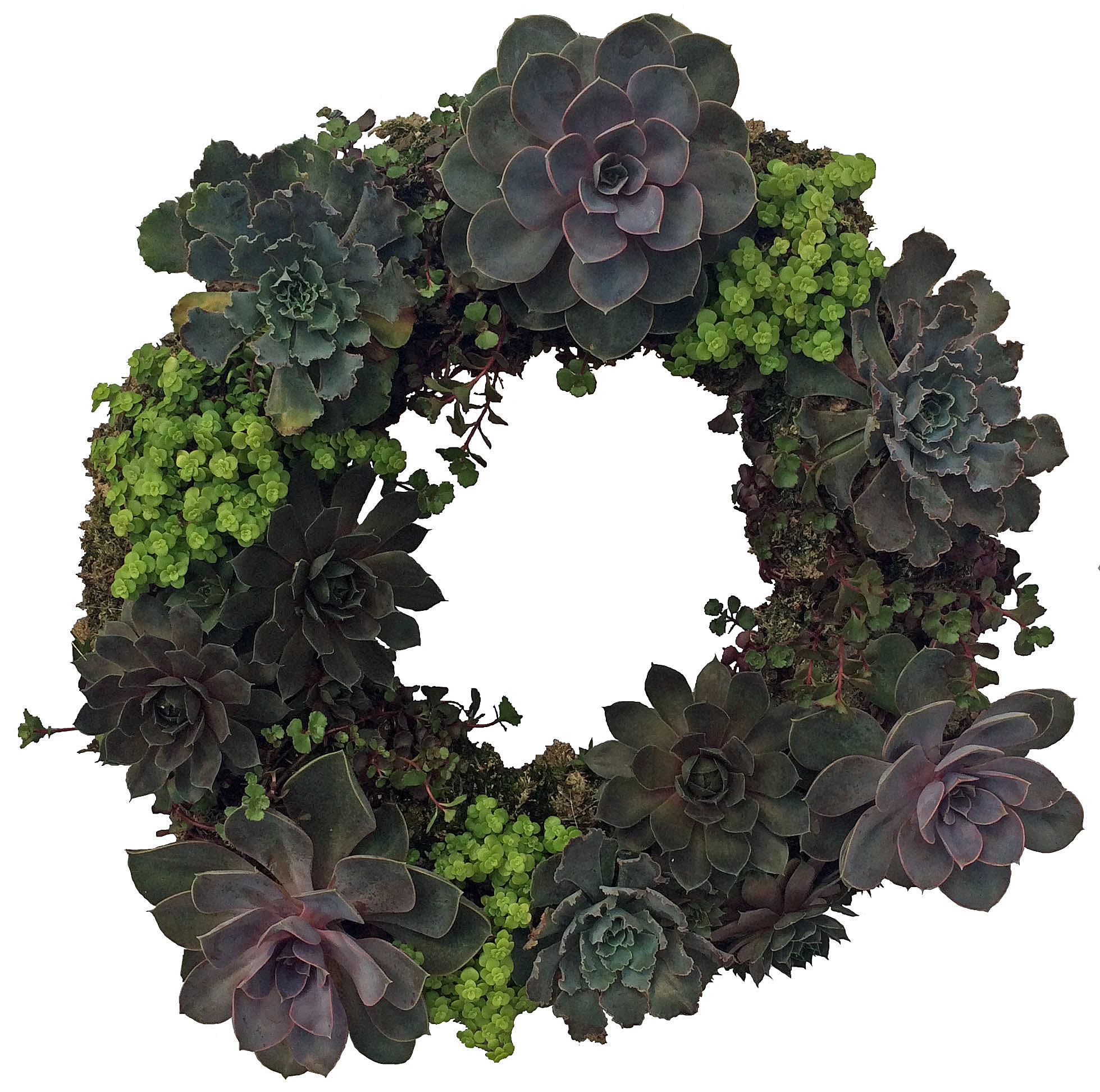 succulent-wreath-website